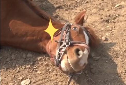 Cavalo que se finge de morto para não ser montado - Já viu isso? | Jeito de Cowboy