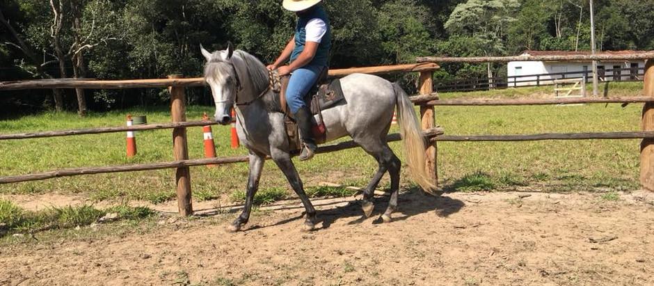Como pegar na Rédea do Cavalo