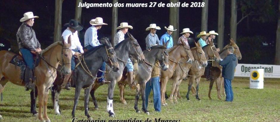 A Noite dos Muares  Fazenda Rio das Pedras e Classificação para a Nacional.