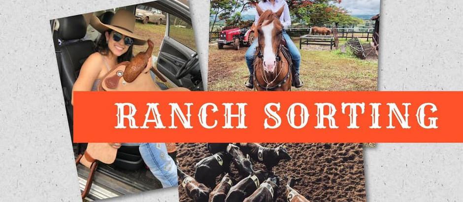 Minha Primeira prova de Ranch Sorting