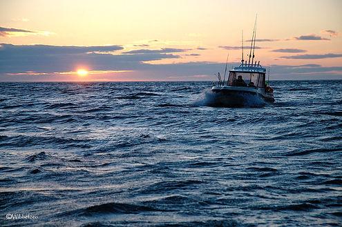 Fiske Havöysund