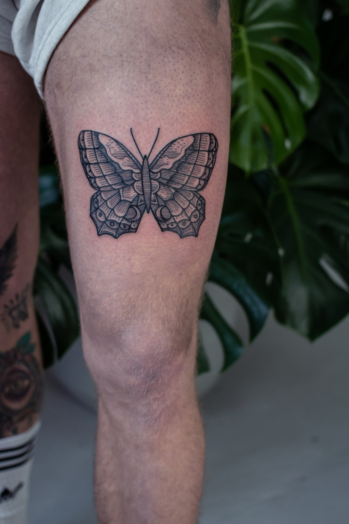 butterfly_special_inaction (1 of 5).jpg