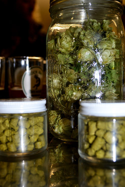 Hops in Jar