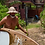 Thumbnail: Pau Hana - Malibu Tour Wood