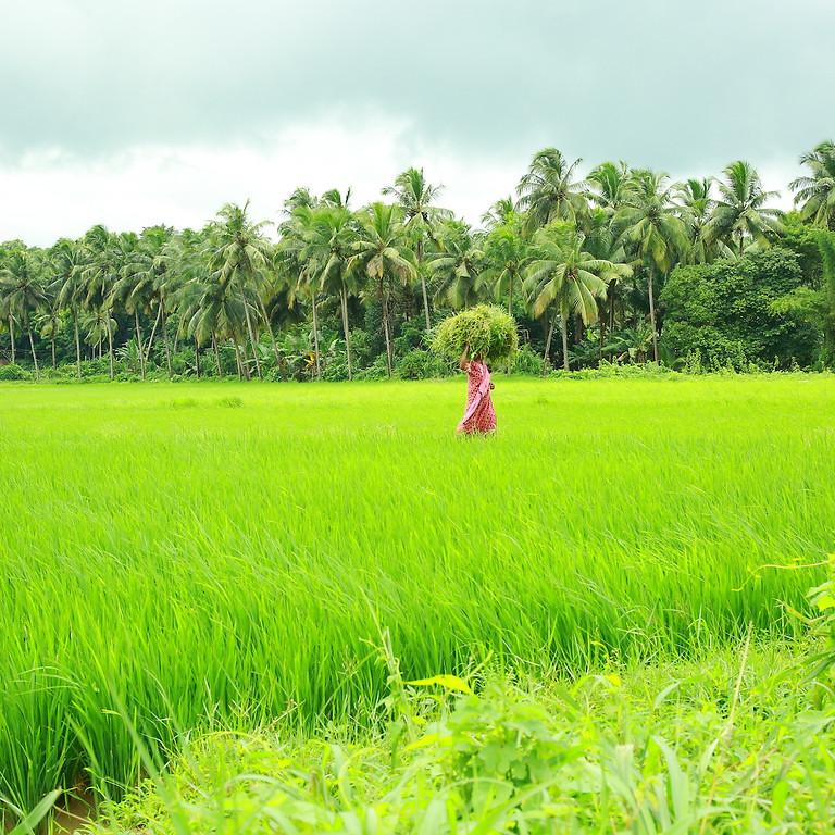 Panchakarma At Kerala 2021