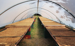 Drying Beds