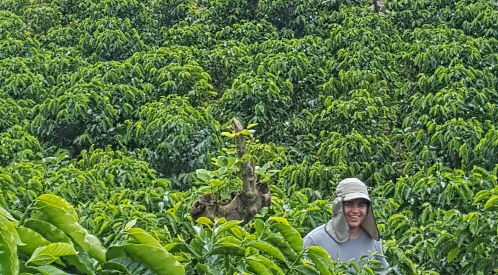 Beautiful Coffee Fields