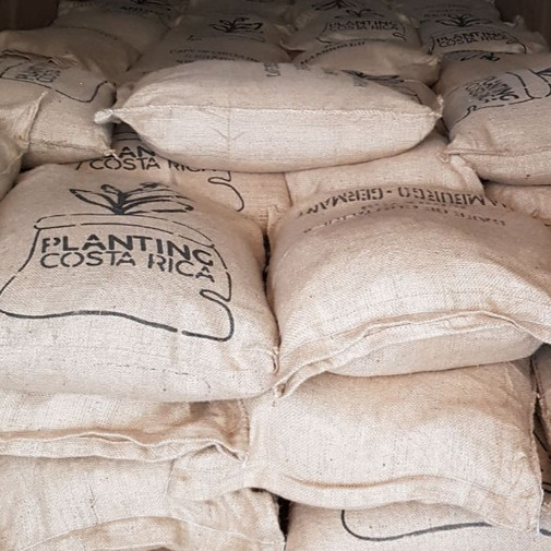 Planting Costa Rica Coffee Sacks