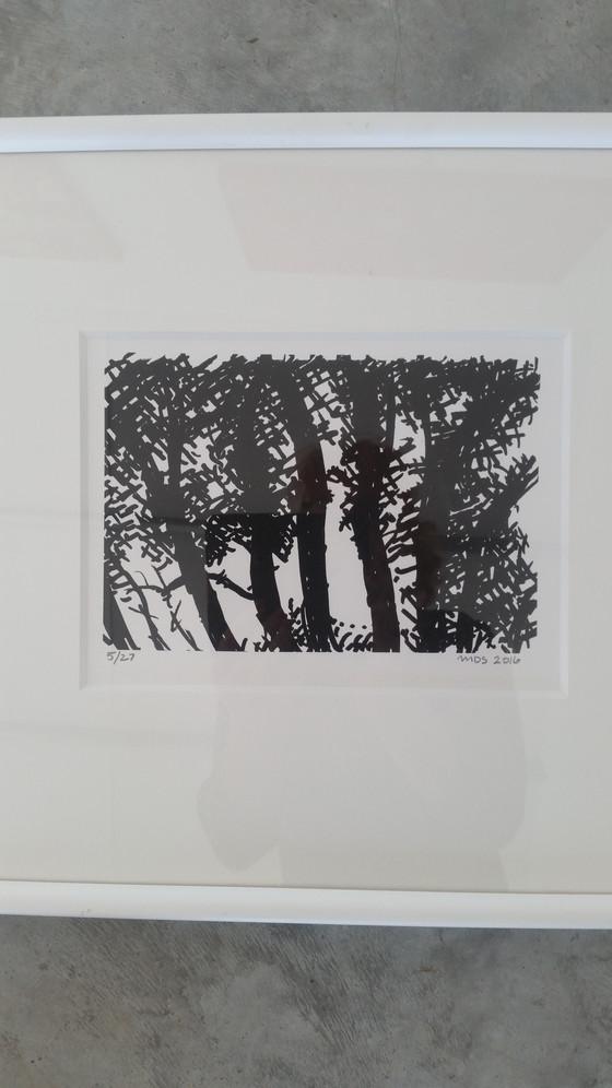 Light Through the Trees