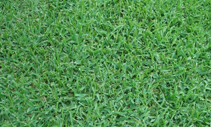 Sod/Grass Install