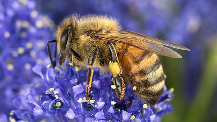 8oz Bright Bee