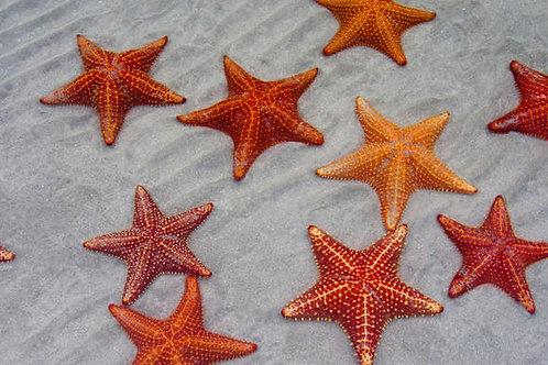 Starfish 16oz - Carrot, Apple, Lemon