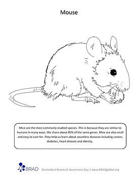 Mouse Coloring Sheet.jpg