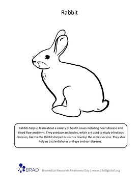 Rabbit Coloring Sheet.jpg