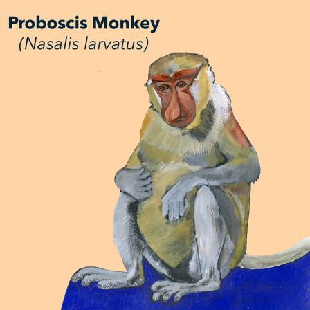Proboscis.jpg