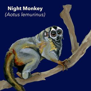 Night Monkey.jpg