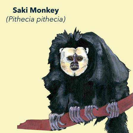 Saki Monkey.jpg