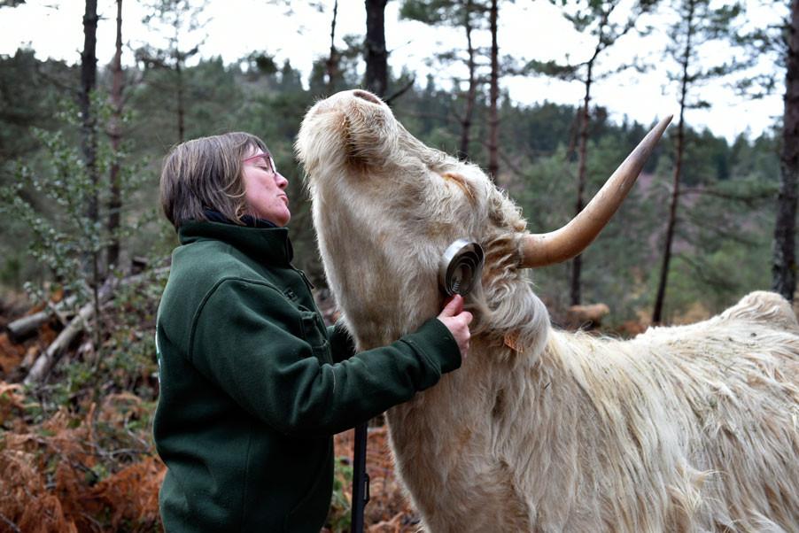 Sabine vaches Highlands _EMAYER