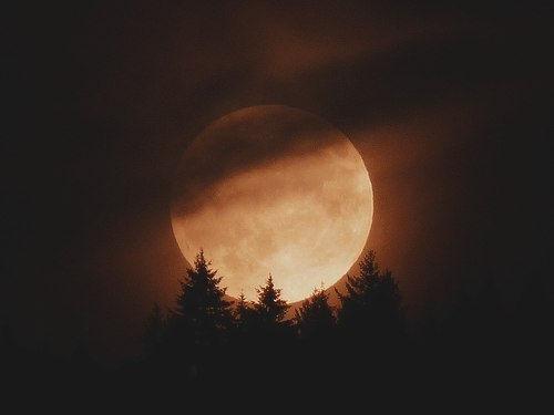 fall moon.jpg