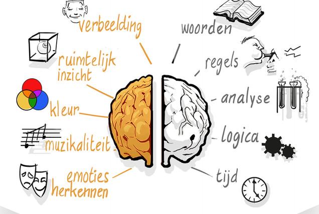 hersenhelft karakteristieken.jpg