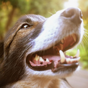5 Reasons Why Dog Dental Care Is Important