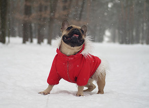 How to Keep a Dog Warm in Winter Weather
