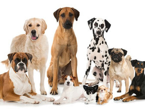 Dog Health Issues: Do Mixed Breed Dogs Have an Advantage Over Purebred Dogs?