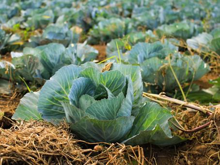 THE FARM ACT – A SHIFT TOWARDS CAPITALISM