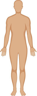 human-body-outline-in-three-colors-vecto