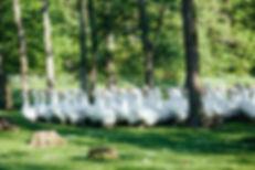 Enten und Gänsezucht im Mangfalltal