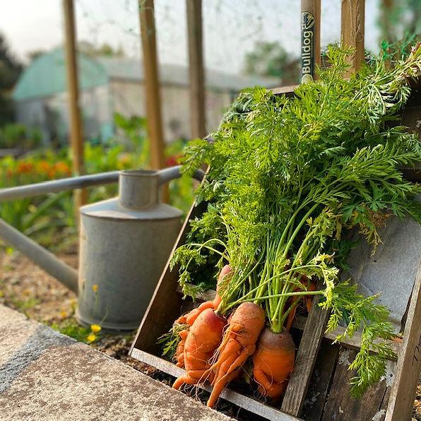 Carrot 4.jpeg