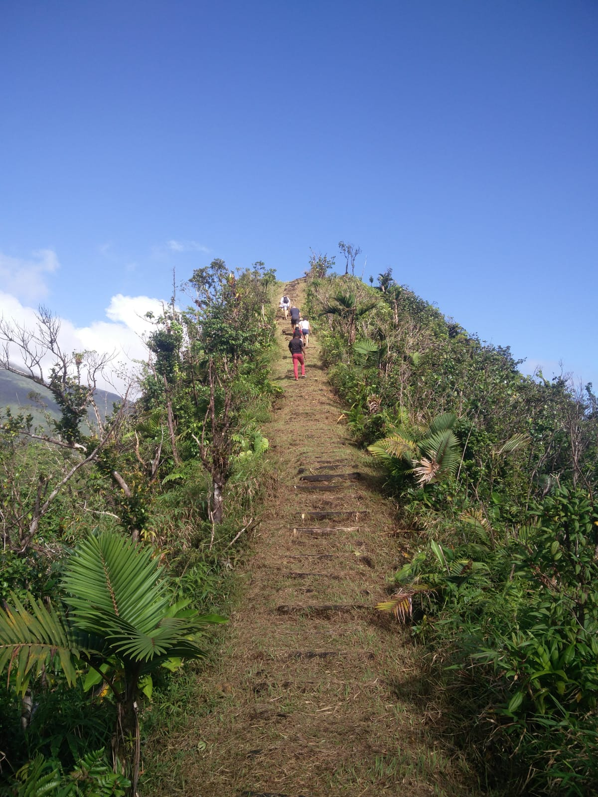 The Freshwater Lake Trail