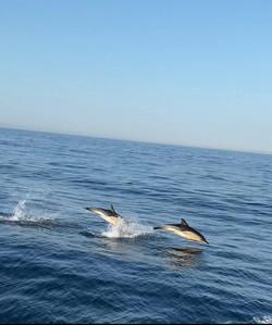 Dolphins Off S Devon