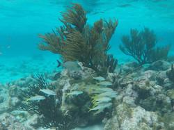 Tobago Cays Reef Fish
