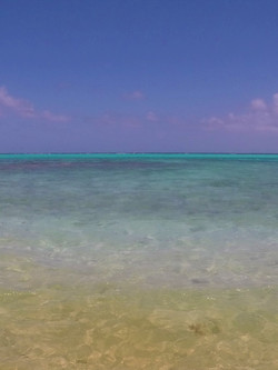 Over the Horseshoe Reef Tobago Cays