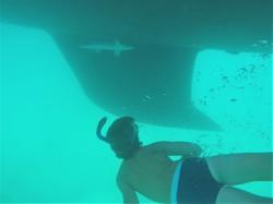 Ramoras Under the Hull - Cocoa Bay