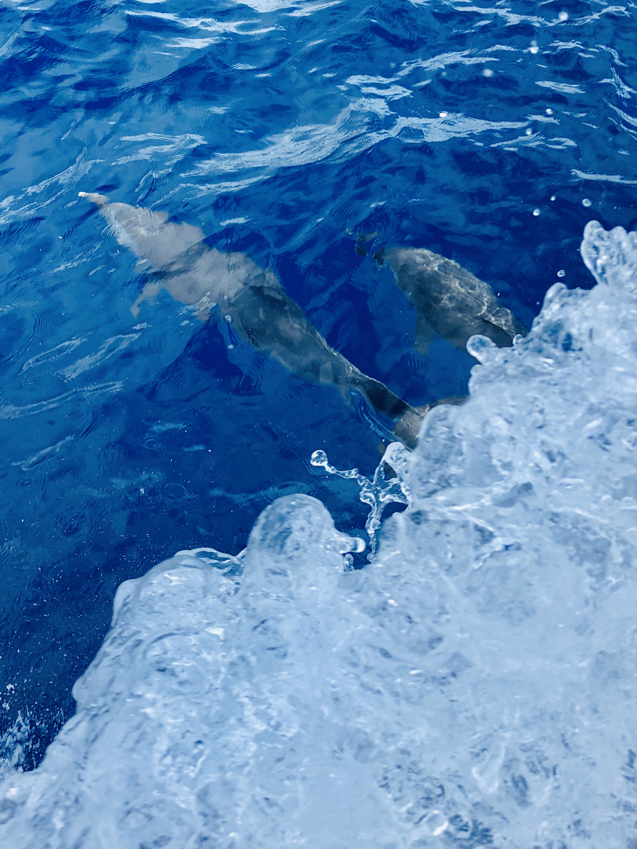 Dolphins NE Martinique