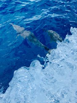 Dolphins NE Martinique