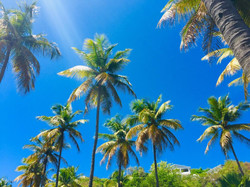 Palms on Mustique