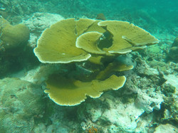 Hard Coral - Mustique01