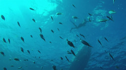 Chatham Bay Snorkelling_Moment