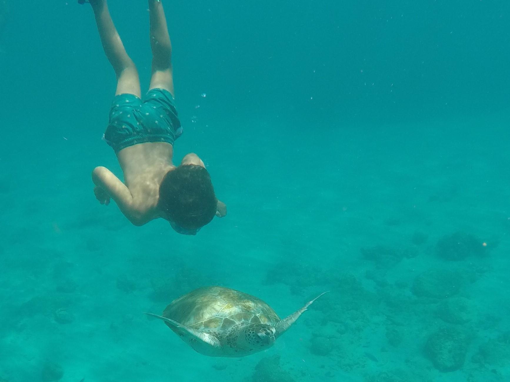 Green Turtle at Six Mens Bay