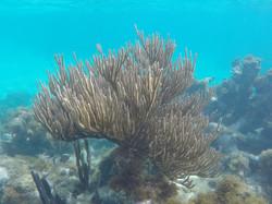 Soft Coral off Bird Island