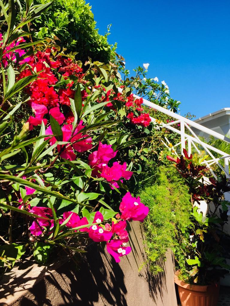 Mustique Flora