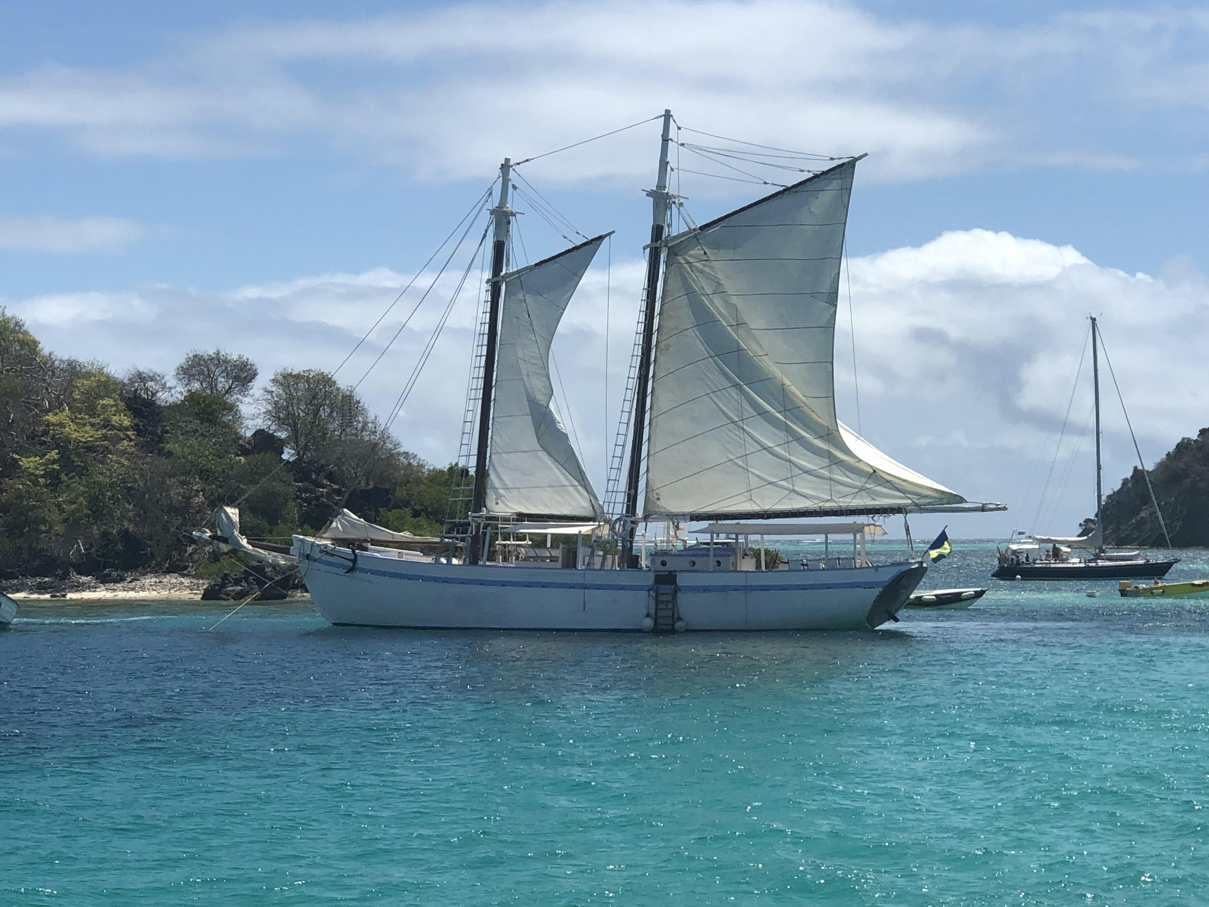 Friendship Rose - Tobago Cays
