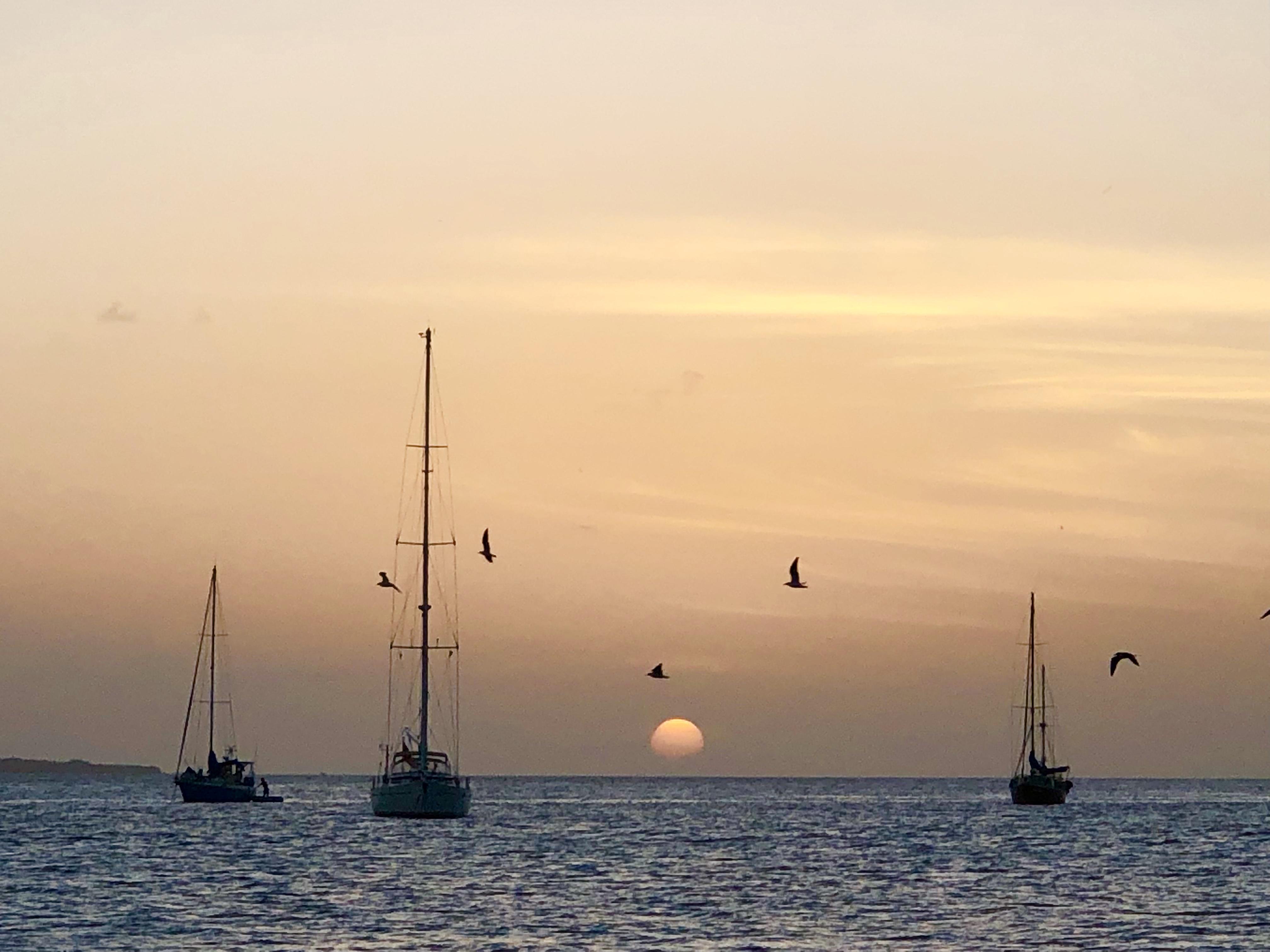 Moana & PSV Sunset
