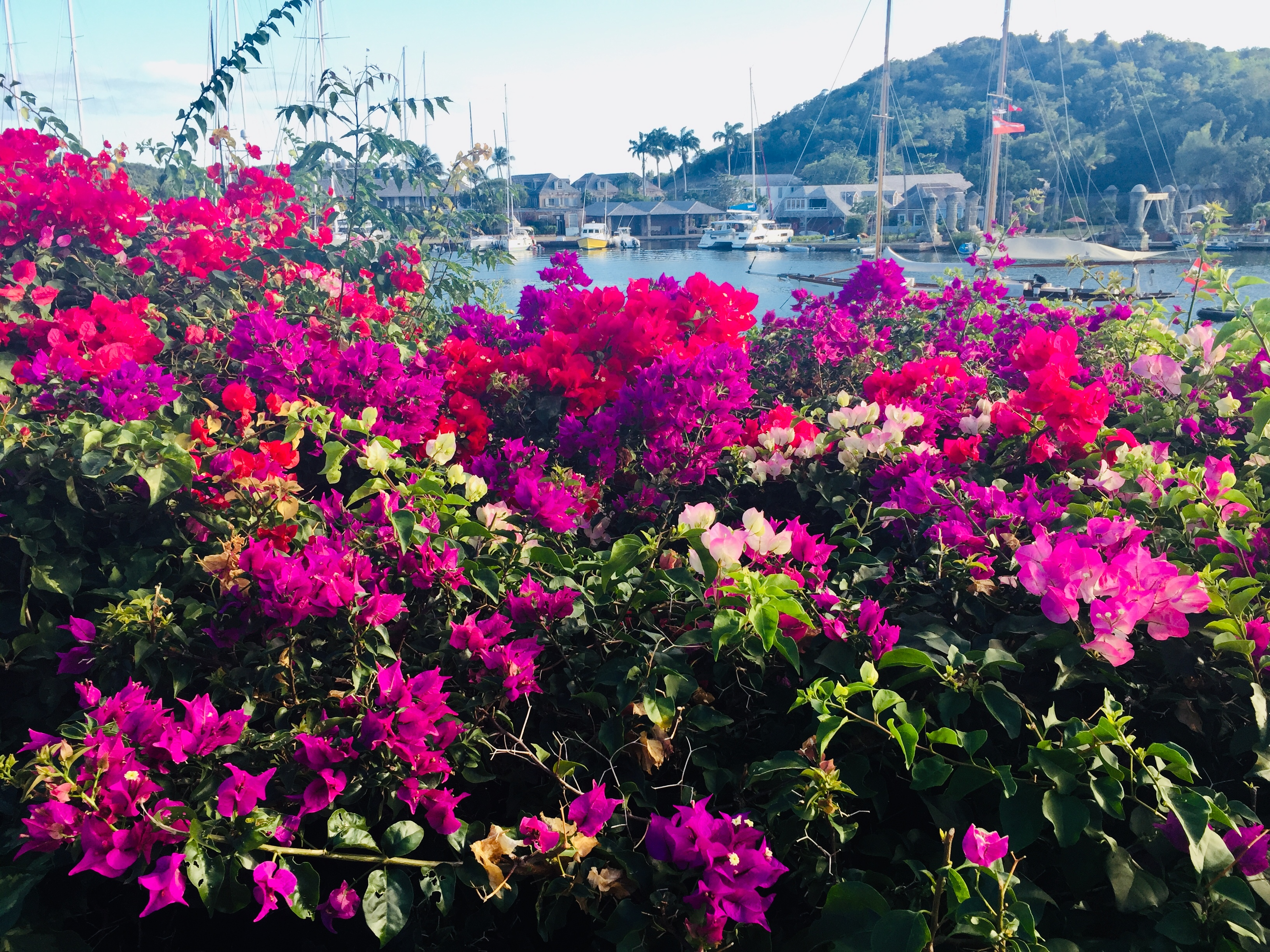 English Harbour Flowers