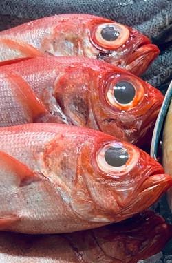 Fugueira da Foz Fish Stall