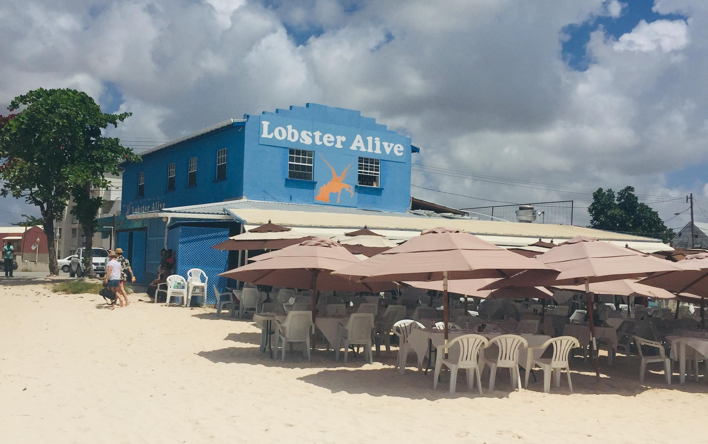 Lobster 'Alive'!