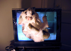 Teaching Video Art To A Live Hare